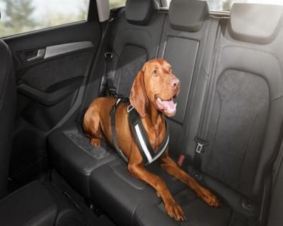 Audi Hundeschutzgurt Grösse L, Sicherheitsgurt für Hunde